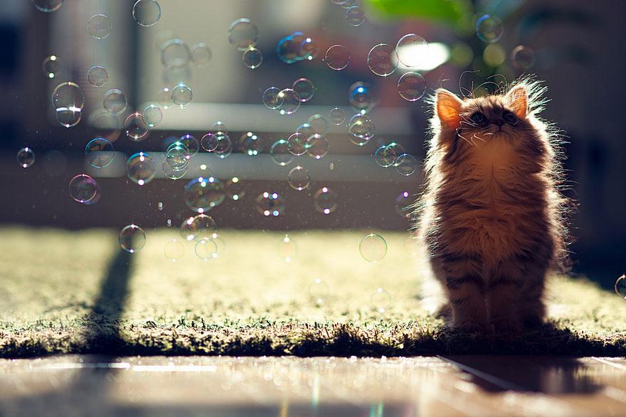 Photos : Daisy, ce petit chaton incroyablement mignon  > Creanum