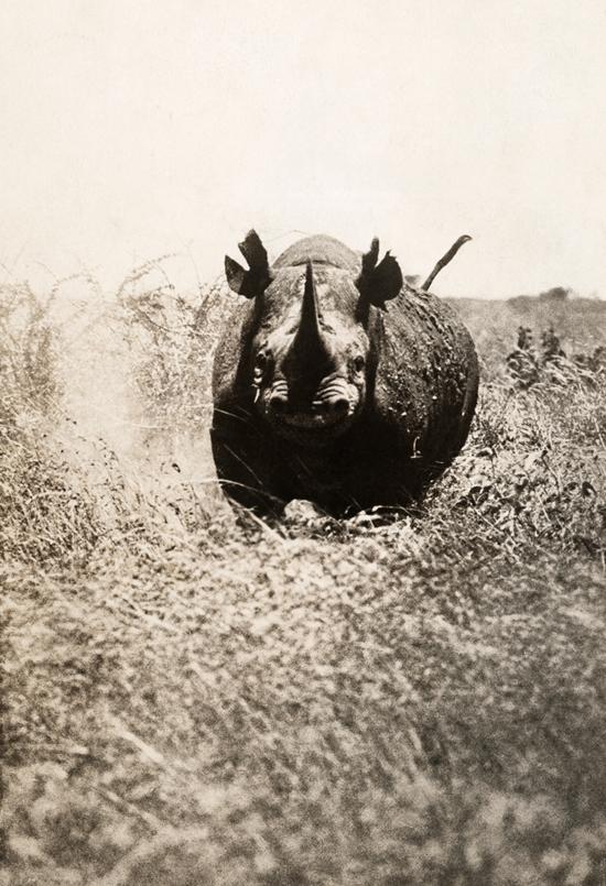 National Geographic dévoile ses photos non publiées > Creanum