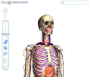 Body Browser : exploration du corps humain avec WebGL de Google > Creanum