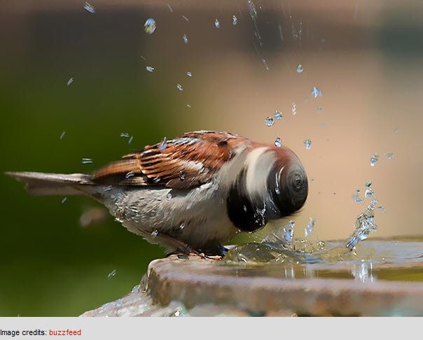 50 magnifiques photos animalières > Creanum